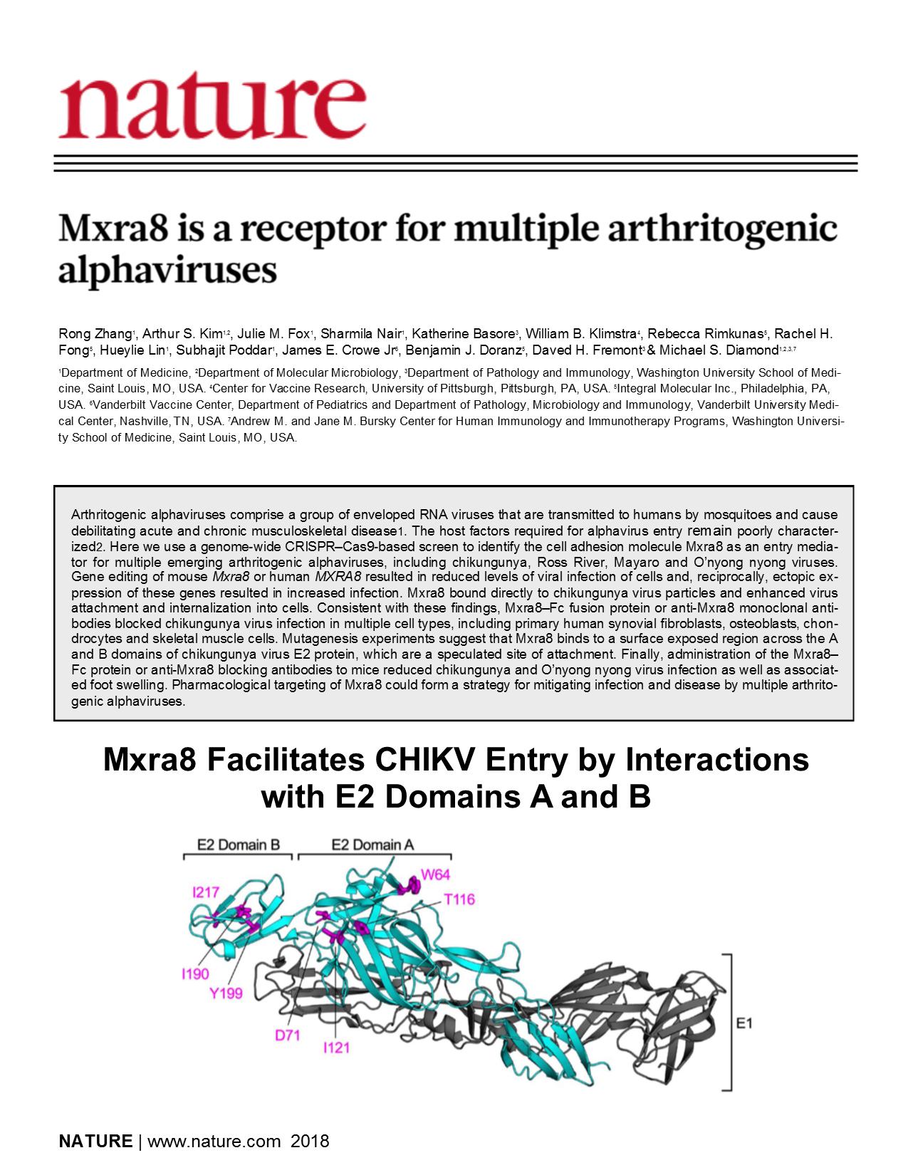 2018_Nature_Zhang_CHIKV-receptor