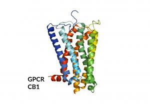 Case-Study-GPCR-CB1