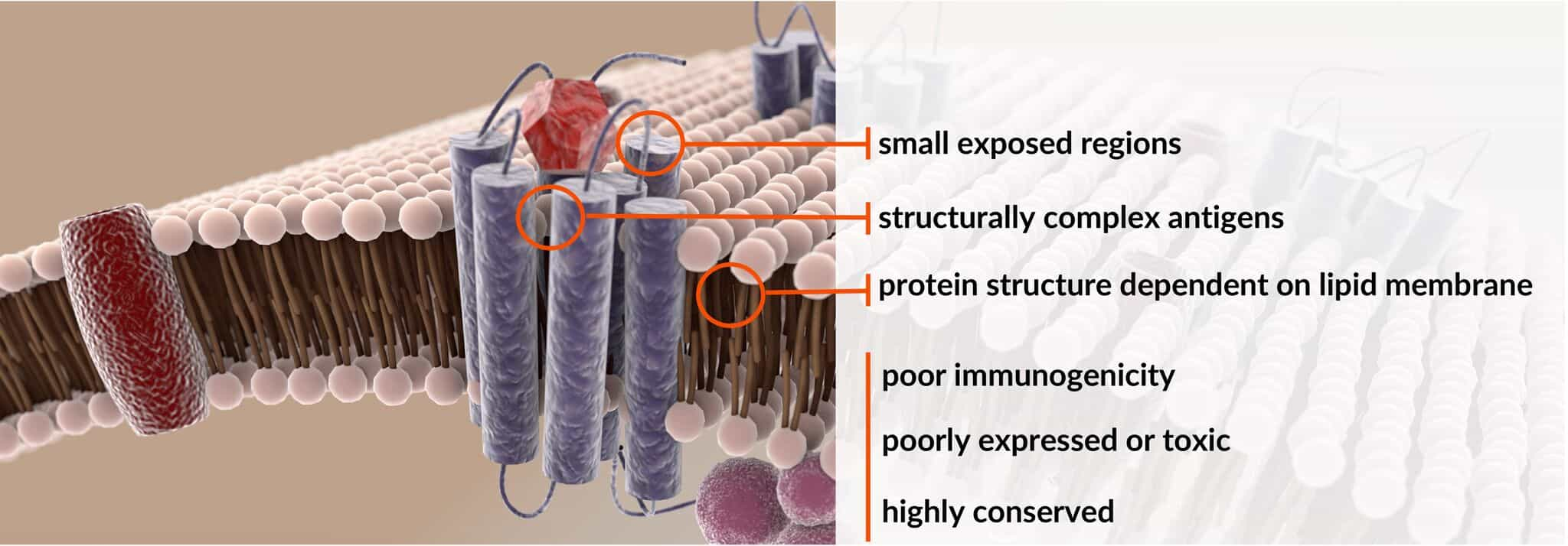 MPS Antibody Discovery Engine, MPS Antibody Discovery Banner