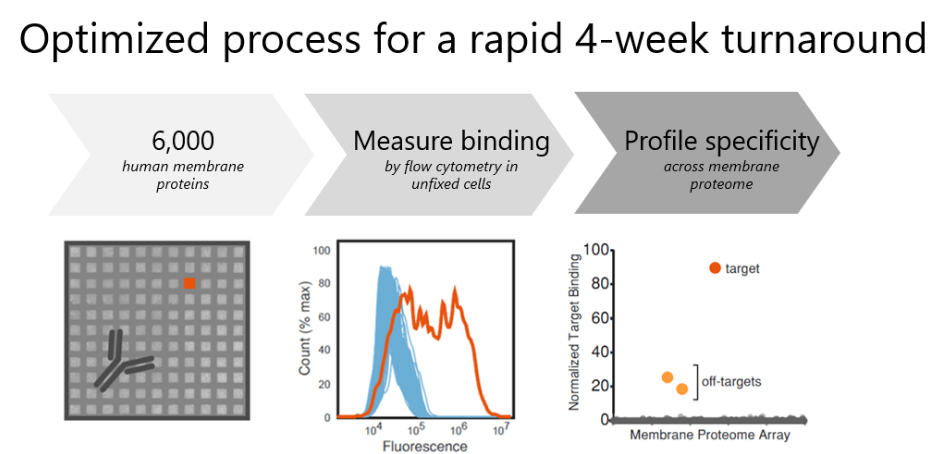 Optimized process for a rapid 4-week turnaround