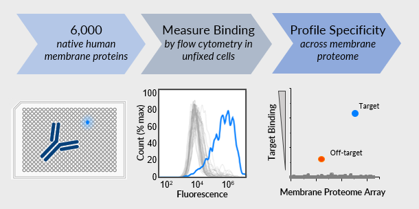 Why is the Membrane Proteome Array so successful?